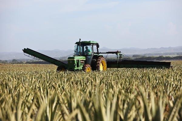 A green tractor drives through a golden field of grain